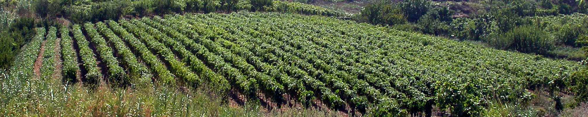 slider_04_agriculture